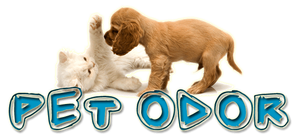 Pet Treatment On Carpet Cleanings